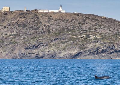 Dofí al Cap de Creus