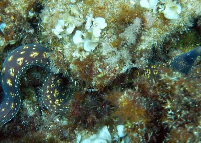 Snorkel a les illes Formigues