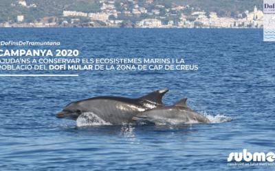 Dofins de Tramuntana 2020